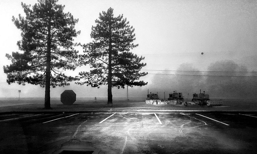 Early Morning Fog Pine Trees Blandwhite Black And White Darkness Fog Trees In The Distance