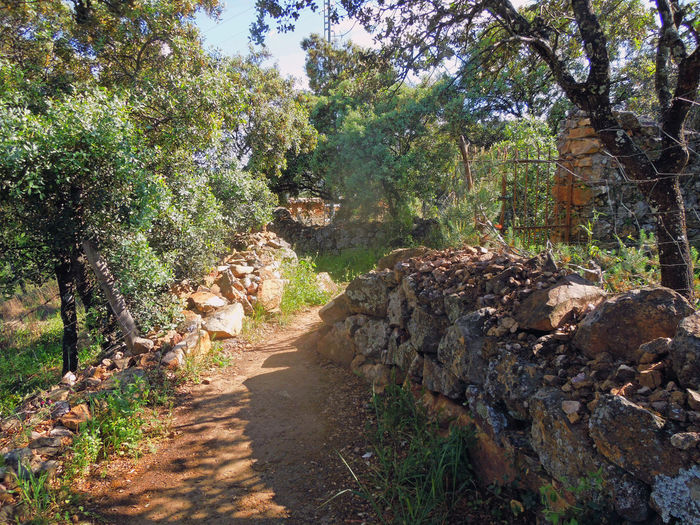 Beauty In Nature CastillaLaMancha Diminishing Perspective Dirt Road Footpath Green Color Growth Landscape Narrow Nature Non Urban Scene Non-urban Scene Pathway Plant Scenics Sky SPAIN The Way Forward Tranquil Scene Tranquility Travel Photography Tree Vanishing Point Walking Around Walkway