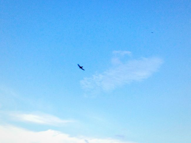 Never let someone else's happiness become more important than your own.🐦🐦 My Life Birds🐦⛅ Blue Sky