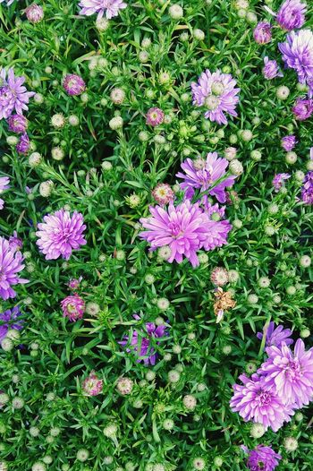 A Beautiful Close-up of Green Leaves and Pritty Purple Flowers . This Picture would make a Striking Background . Featuring Flower High Angle View No People Day Beauty In Nature Nature Growth Pink Color Field Outdoors Green Color Fragility Plant Freshness Blooming