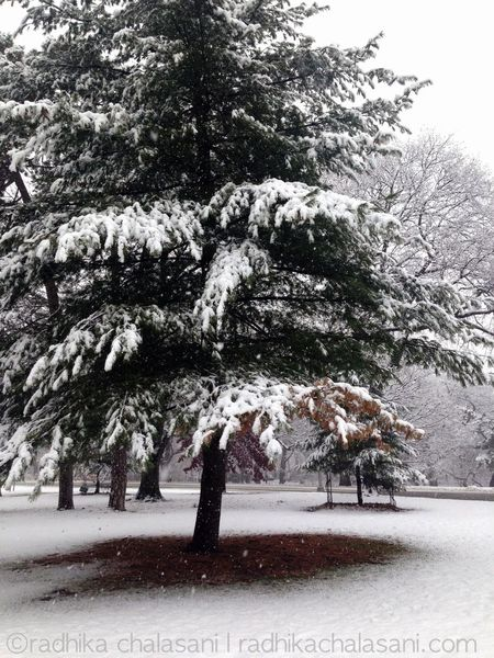 First snow this winter. Prospect Park Brooklyn
