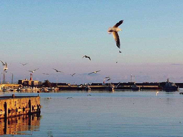 Bird Animals In The Wild Water Animal Themes Flying Nature Sea Outdoors Waterfront Clear Sky Animal Wildlife No People Day Spread Wings Beauty In Nature Scenics Building Exterior Sky Ship Sicily Be. Ready.