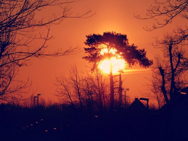on my way home springsun is waiting for me🤗 For My Friends😚 Morning Light Sunrise_Collection Sunrise Today😍 Countryside Country Life Idyllic Scenery Lucky Me🦄 Listen To Your 💓 Still Cold Outside 😤 Spring Is Near🤗 Afterworkluck Tree Sunset Forest Tree Area Silhouette Sunlight Forest Fire Sun Winter Sky Go Higher Go Higher