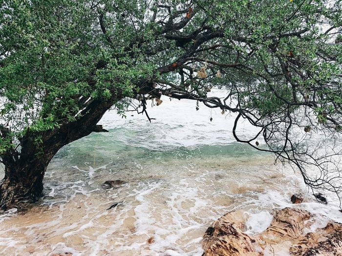 เกาะล้าน เกาะล้าน หาดตายาย Tree Water Branch Sky