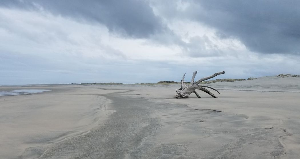 Washed ashore Farewell Spit In The Middle Of Nowhere. Beauty In Nature Cloud - Sky Dead Tree Branch No People Sea Tranquil Scene