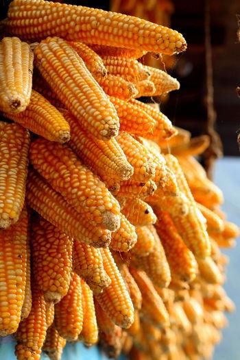Close-Up Of Orange Corns Tied To Railing