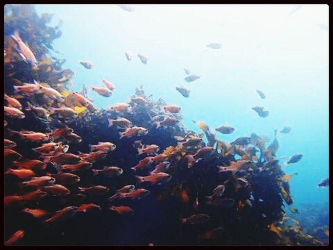 Under Water Sea Scuba Diving