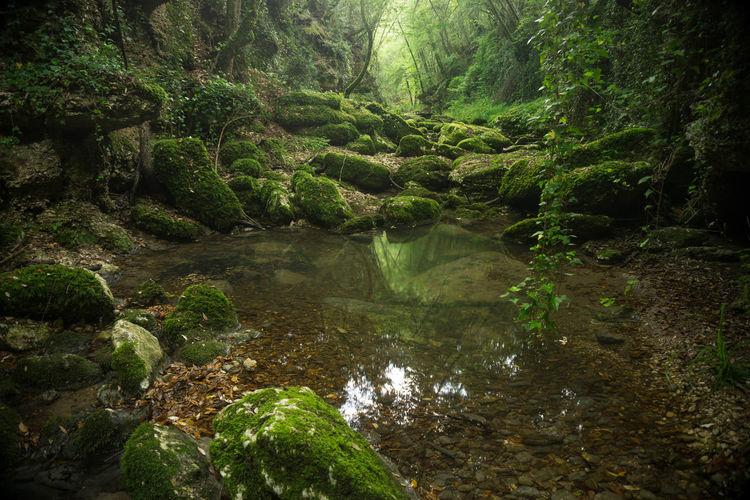 Tusciafotografia Tuscia  Viterbo Samyang 12mm F2 Sony A6000 Visitlazio Landscape Photography Gallese Canyon Green