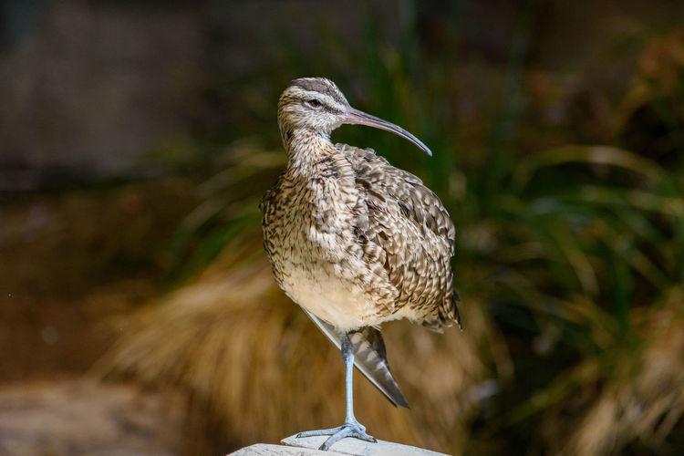 Animal Wildlife Animals In The Wild Bird Bird On One Leg Bird Perched Fauna Natural Nature One Animal Outdoors Perching Wild Wildlife