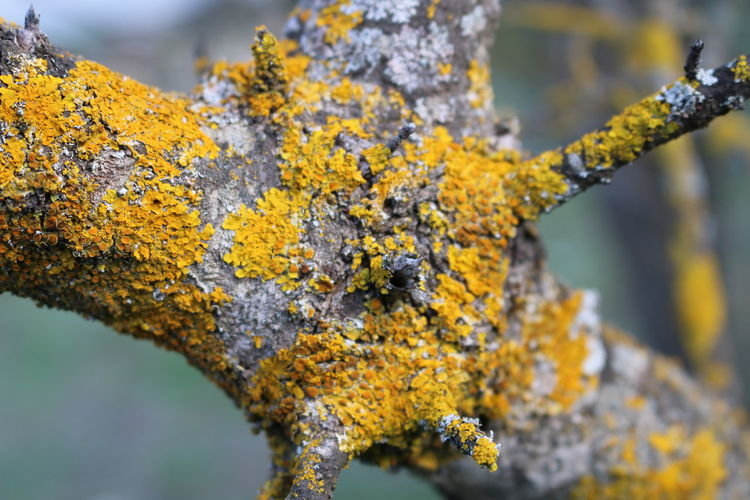 Branches Cyprus Limassol, Cyprus Natural Beauty Nature Nature Photography Tree Branches Wildlife & Nature Wildlife Photography Branch Close-up Day Limassol Limassol Cyprus Nature Nature_collection Nature_perfection Naturelovers Naturephotography No People Outdoors Tree Wild Plant Wild Plants Yellow Color