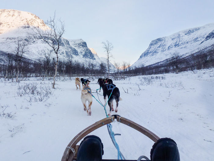 Sled Dogs On Snow Covered Field Against Sky