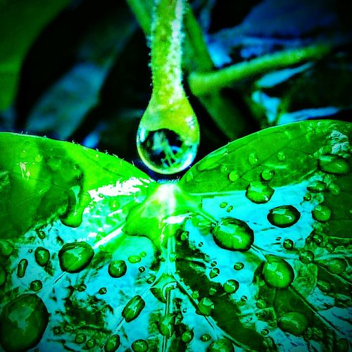 After rain Green Color Nature Drop Leaf Beauty In Nature Close-up Freshness Backgrounds