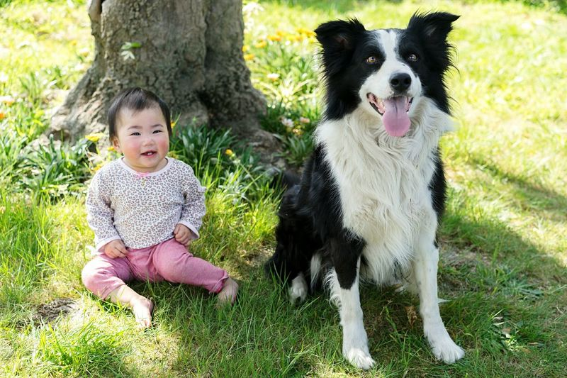 Pets Dog Baby