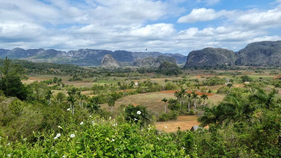 outstanding landscape of Viñales with mountain range of Mogotes and tobacco fields in Cuba - world heritage Cuba Collection Mogotes Viñales Valley, Cuba Mountain Range Tabacco Field Palm Trees Unesco World Heritage Nature Photography EyeEm Nature Lover EyeEm Gallery EyeEm Selects Travel Destinations Travel Vacation Time High Angle View Wide View Cuba Collection Outstanding Landscapes Mountain Agriculture Rural Scene Field Cloud - Sky Landscape Cultivated Land Farmland Agricultural Field Plantation Patchwork Landscape The Great Outdoors - 2018 EyeEm Awards