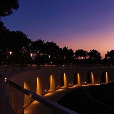 Sky Illuminated Tree Architecture Nature Plant Night City Lighting Equipment