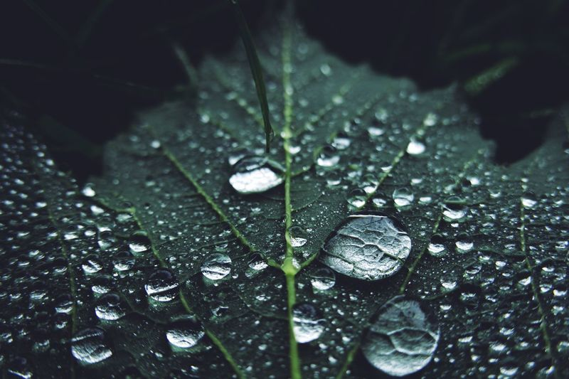 Drop Wet Close-up Water Leaf Plant Part Selective Focus Vulnerability  No People Growth Dew RainDrop Freshness Rain Plant Nature Outdoors Fragility Beauty In Nature Purity