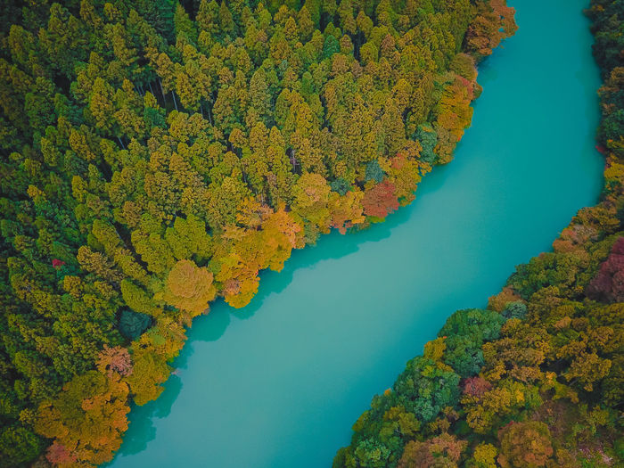 High angle view of trees by lake during autumn