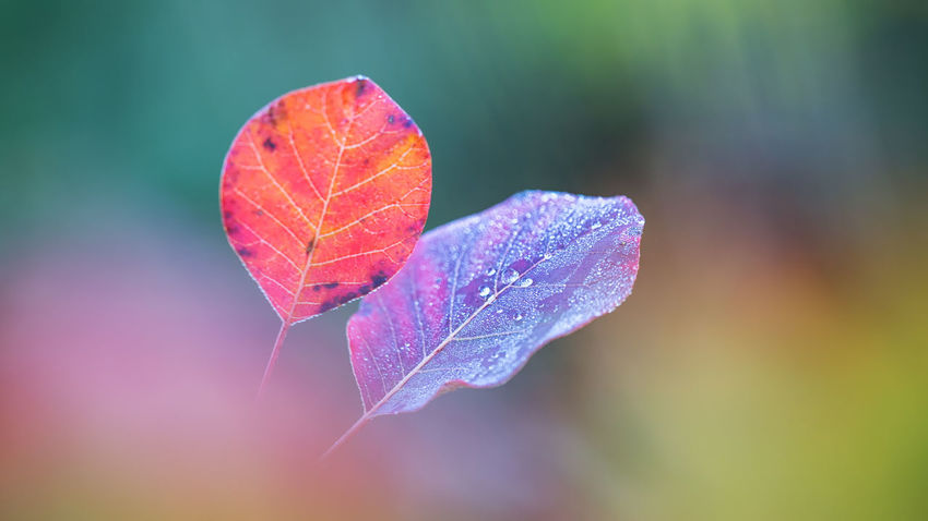 autumn colors Beauty In Nature Close-up Day Focus On Foreground Fragility Freshness Green Color Growth Leaf Nature No People Outdoors Water