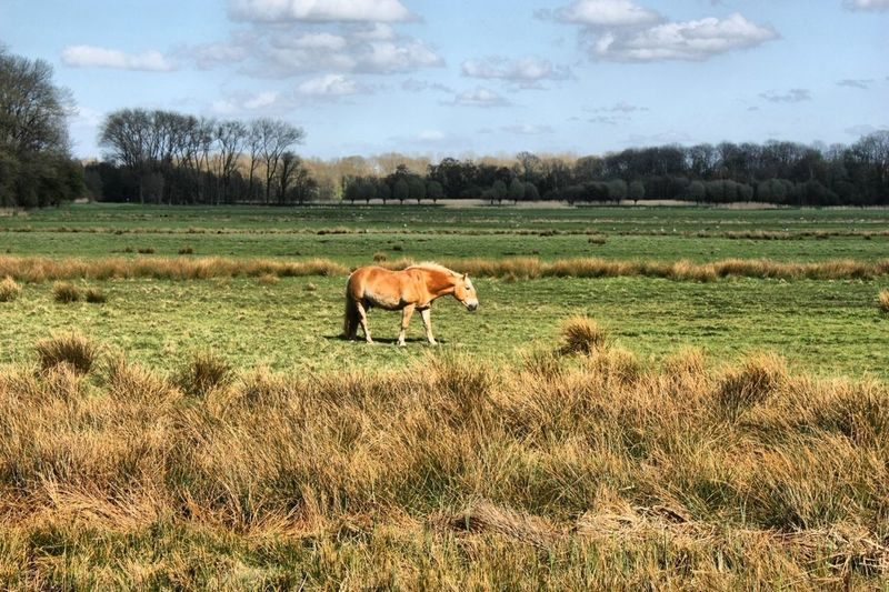 Horse alone.. Alone Horse
