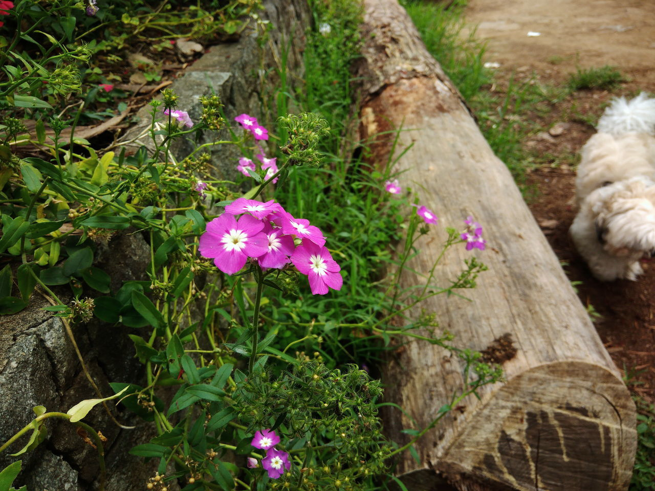 flower, nature, outdoors, growth, no people, plant, day, fragility, beauty in nature, grass, flower head, freshness, close-up