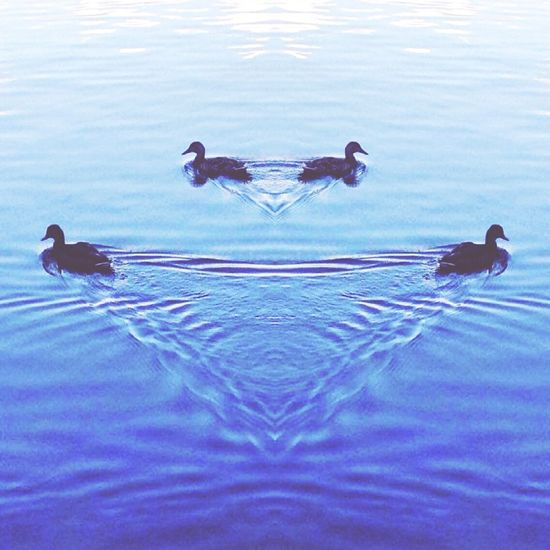Blue Wave Ducks Bird Water Animal Themes Swimming Rippled Water Surface Nature Tranquility Water Bird Animal Themes Swimming Animals In The Wild Blue Rippled Waterfront Water Surface Nature Perching Floating On Water Day Tranquility Water Bird