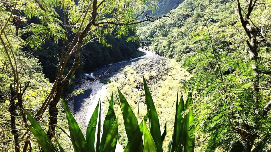 Sentier de l'Entre-Deux Trail Running EyeEmNewHere Reunion Island Trees Sentier Liane Mountain River Tree Shadow Sunlight High Angle View Grass Close-up Green Color Plant Tranquil Scene Countryside Calm
