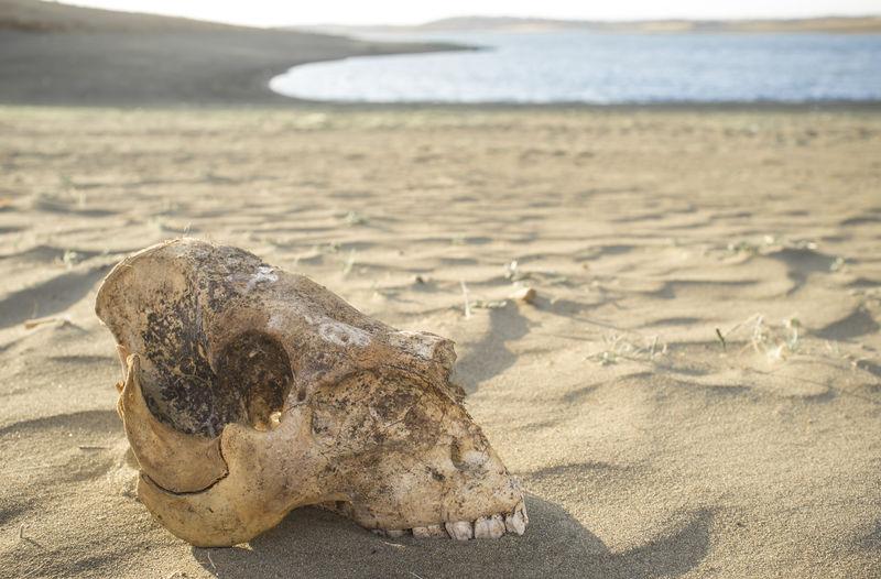 Close-up of animal skull on beach
