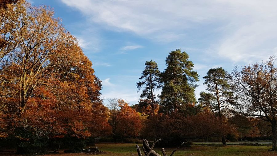 Why Autumn is