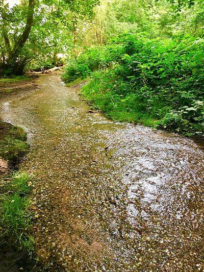 Up stream Plant