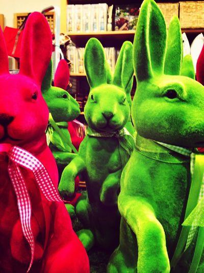 Rabbit Taskforce