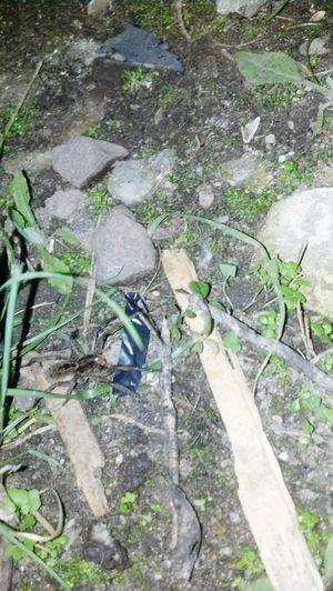 Aranha Spider Aranhaarmadeira Animal Animals Nature Natureza Animals Nature Nightanimals