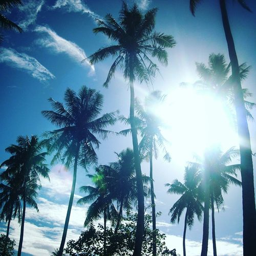 Missing home Moorea Tahiti TahitianWayOfLife Homesick  Coconut Trees Beachphotography EyeEm Nature Lover Nature Sunshine