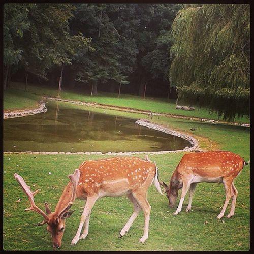 Nature Animals Park Biches