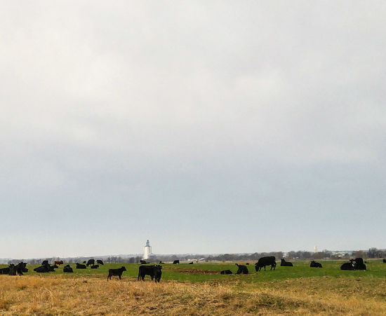 Ranchland & Agriculture Nature Field Agriculture Rural Scene Landscape No People Cattle Grain Elevator Day Pasture Farming Food