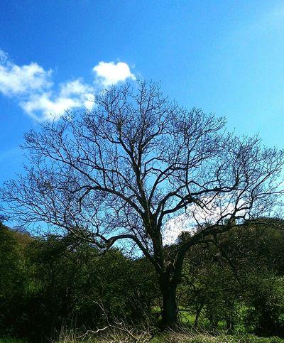 A Nice tree