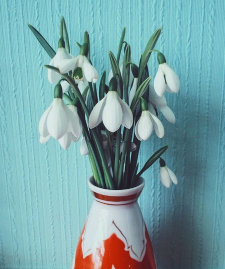 Close-up of white snowdrops in vase against wall