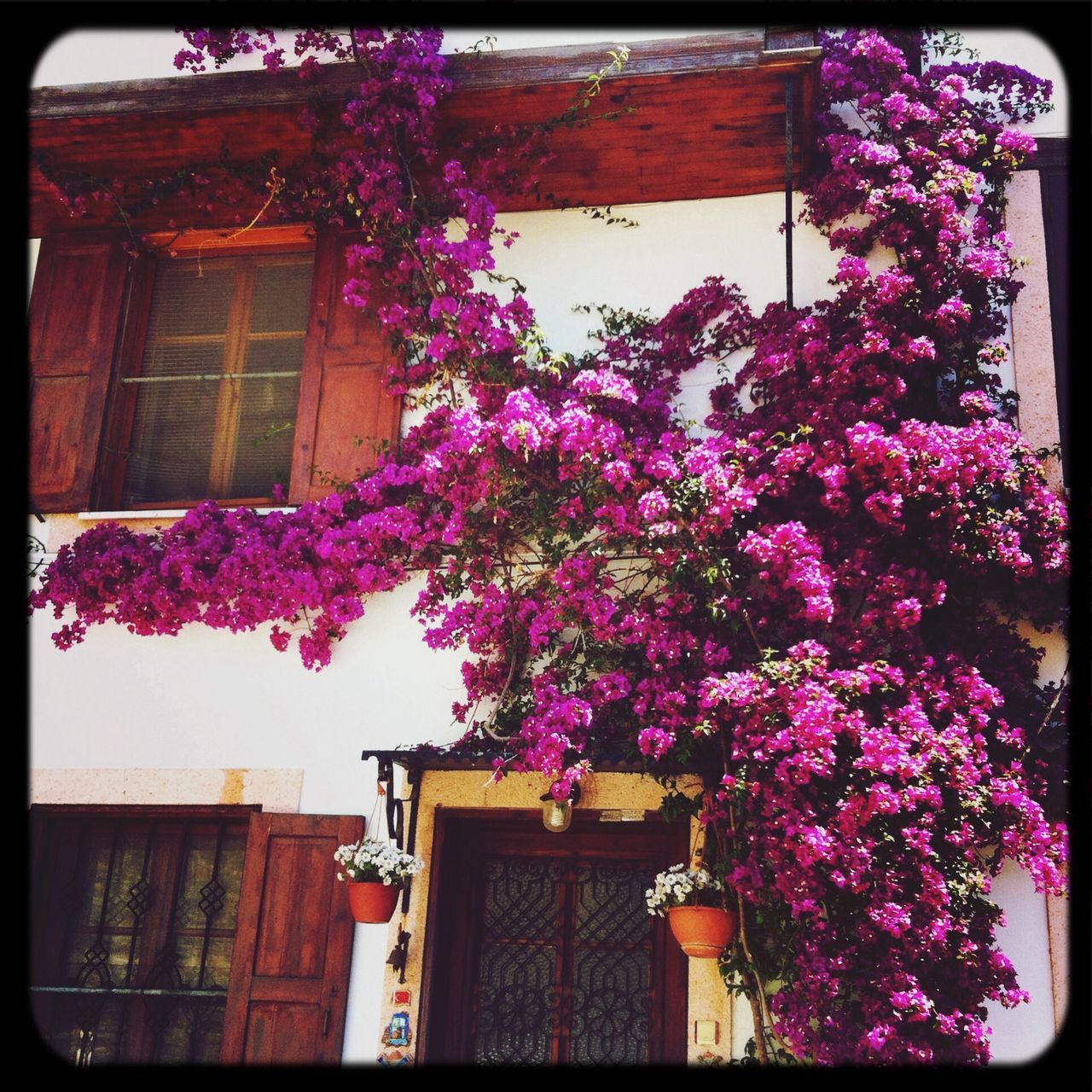 Flower Tree In Front Of Building