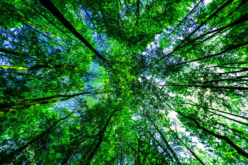 EyeEm Nature Lover Nikon D750 Nikon Fisheye16mm Backgrounds Bamboo - Plant Beauty In Nature Branch Day Directly Below Forest Forestwalk Full Frame Green Color Growth Land Low Angle View Nature Outdoors Plant Tranquility Tree Tree Canopy  Tree Trunk Trunk WoodLand The Great Outdoors - 2018 EyeEm Awards