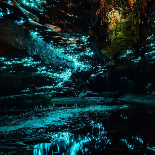 ‪Glowworms ‬ ‪Available as Fine Art Print on www.kess.gallery‬ ‪What an incredible expirience. It felt like being in an alien world. Thanks @hangingpixels_photo_art for showing us this spot.‬ ‪#visitaustralia #visitnsw #naturephotography #glowworm #glowworms #sydney #ilovesydney #igerssydney #visitnsw #australia #sunset #landscape #landscapephotography #landscape_captures #sunset_vision #way2ill #nikon #nikonaustralia #focusaustralia #earthofficial #earthfocus #resourcetravel #ig_australia #australiagram #jaw_dropping_shots‬ Glowworms Water Nature Night No People Illuminated Reflection Outdoors Beauty In Nature Capture Tomorrow