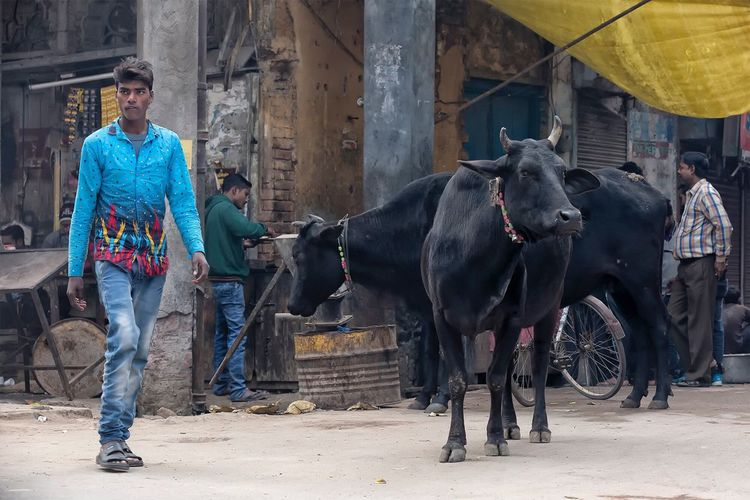 Street scene in Allahabad Uttar Pradesh. January 19, 2017. Livestock Real People People People Photography EyeEm Best Shots - People + Portrait Incredible India Cultures Indian Travel Photography Check This Out Storytelling India Travel Street Photography Documentary Streetphotography Portrait Lifestyles