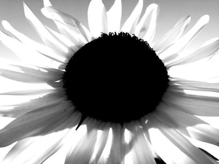 🌞 Flower
