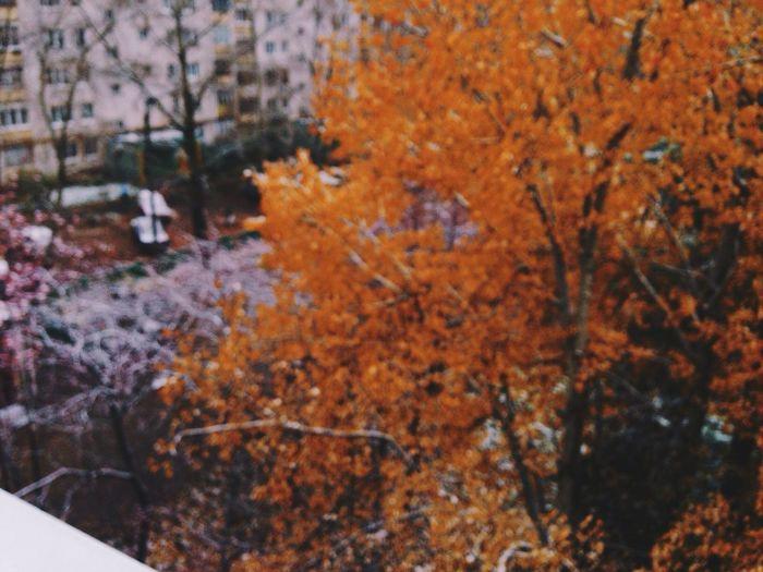 Nofocus  Vscocam View Autumn Colors