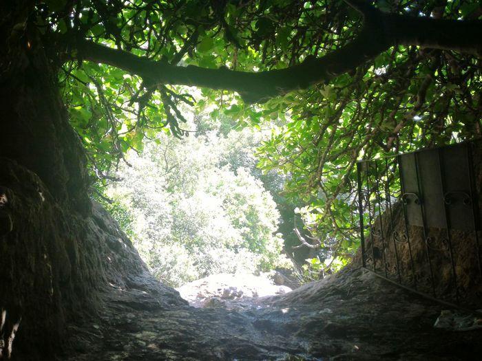 Leaving the Bat Cave Hike in Beit Shemesh Israeli Light