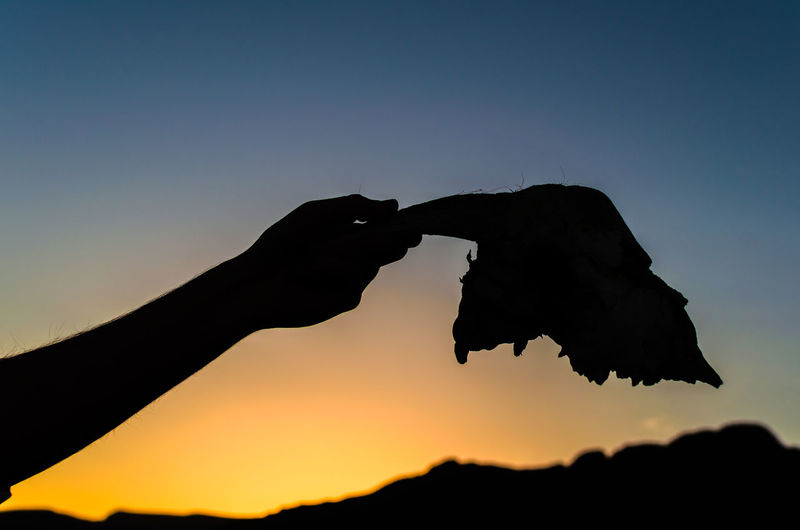 Silhouette person holding leaf against sky during sunset