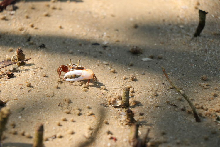 High angle view of small crab on beach