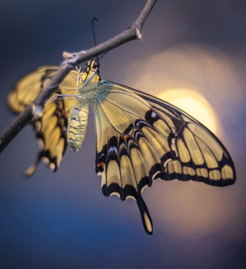 Close-up of butterfly on branch against sky