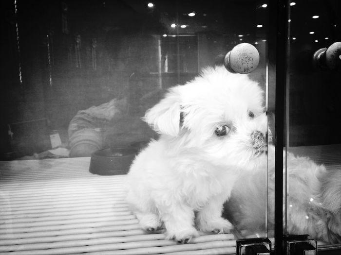Korea Photos Pets New Friends Dog Taking Photos
