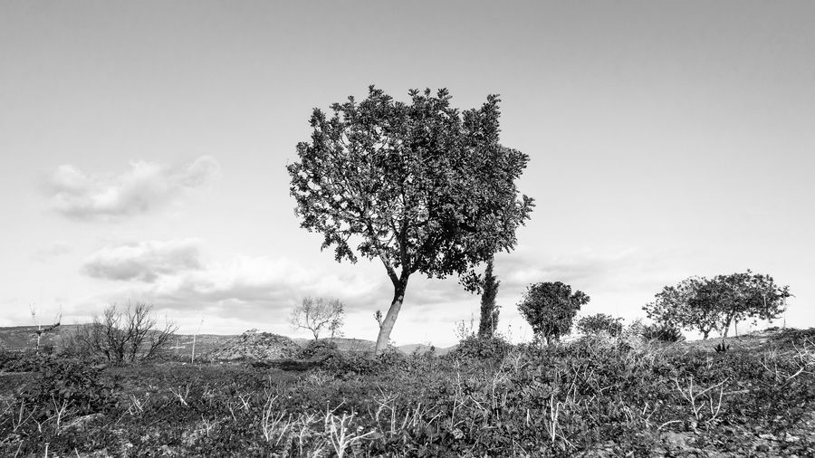 Plant Tree Field Sky Land Nature Grass Growth Environment Beauty In Nature Landscape Tranquility Tranquil Scene Day Cloud - Sky No People Scenics - Nature Outdoors Non-urban Scene Single Tree EyeEm Black And White Blackandwhite EyeEm Best Shots