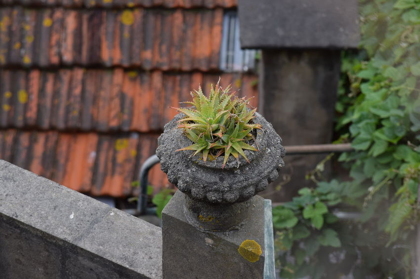 Cactus Green Vase Clay Vase Day Growth Nature No People Outdoors Plant Stone Vase Vase Of Flowers