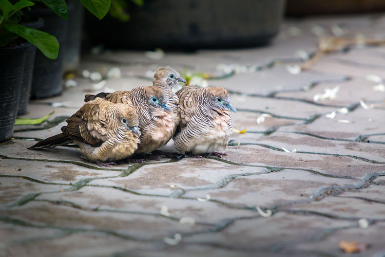 Close-up of birds on footpath